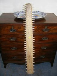 Antique sawfish bill £460